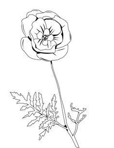 Poppy, : Pretty Picture of Red Poppy Coloring Page Red Pictures, Pretty Pictures, Coloring Sheets, Coloring Pages, Poppy Coloring Page, Online Coloring, Red Poppies, Some Fun, Folk