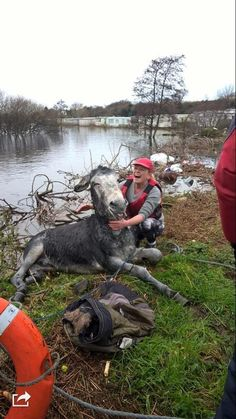 Donkey rescued from