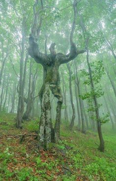 The Spirit of the Forest. Unusual tree found in the mountains of Bulgaria.  Photo: Deyan Kossev