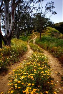 country road (Take me home. Country Life, Country Roads, Country Charm, Take Me Home, Pathways, Belle Photo, Beautiful Landscapes, The Great Outdoors, Wild Flowers