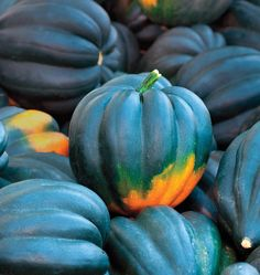 Grow Table Queen Acorn Squash seeds in your organic vegetable garden. Learn when to plant winter squash seed from our How to Grow Squash instructions below.
