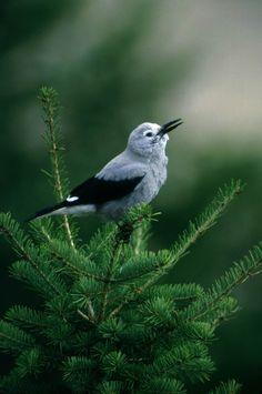 Birds | #Birds