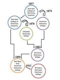 New York City's Five Veterinary Colleges Veterinary Colleges, New College, Cornell University, New York City, New York, Nyc