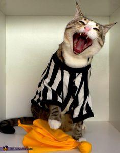 NFL Referee Cat - 2012 Halloween Costume Contest