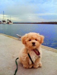 See more Top 10 Most Affectionate #Dog Breeds
