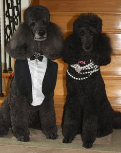 Magic and Mercí dressed up and ready for visiting a local nursing home and hospice centre.