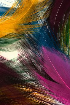 Abstract Colorful Feathers Most Beautiful Hd Wide Wallpaper. The High Definition Wallpaper Daisy Wallpaper, Feather Wallpaper, Rain Wallpapers, Hd Wallpaper Desktop, Flower Phone Wallpaper, Latest Hd Wallpapers, Butterfly Wallpaper, Colorful Wallpaper, Photo Wallpaper