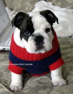 OMG --- a wee little sweater for Chubbella
