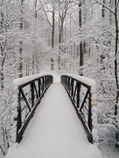 SNOW, WINTER, BRIDGE, FOREST, TREES, PHOTOGRAPHY