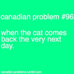"""You thought he was a goner, but the cat came back."" Fred Penner is awesome! Canadian Memes, Canadian Things, I Am Canadian, Canadian Humour, Funny Laugh, Funny Shit, Funny Stuff, Hilarious, Meanwhile In Canada"