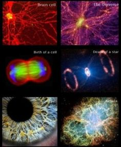 One of my favourites images about similarities found in cosmology and biology. Coincidental?