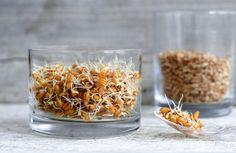fermented wheat germ treats cancer