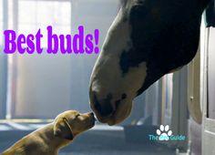 Best buds!