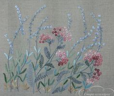 Rölleka salvia/ Wildflower