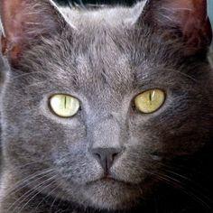 #Pekka #kissa  #cat #catswithcattitude #poseeraus #iirikset