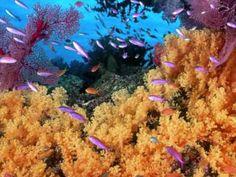 Els animals del mar - YouTube