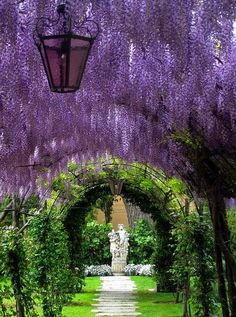 Wisteria tunnel This is my childhood in Spring