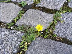 Mario Strack - She Said 1 (Cobblestone Flower) - universal arts Galerie Studio - Original Fotografie - limitierte Auflage nummeriert und handsigniert universal arts Galerie Studio edition http://www.amazon.de/dp/B00M6VJ1VK/ref=cm_sw_r_pi_dp_4Kbdwb1JN9SV3