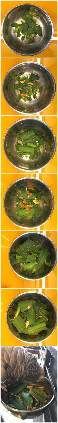 Foraging for parrots: different layers of yucca leaves with treats hidden in between.