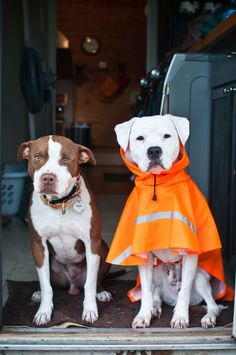 Wonderful blog about pit bull rescue with really great photos.