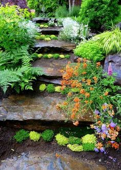 steps planted with ground cover plants between steps and a mixture of ferns, Lily's, lupine and green plants along side the steps....