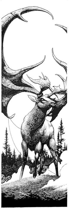 Stag by  Aaron Horkey #illustration #deer #drawing #nature