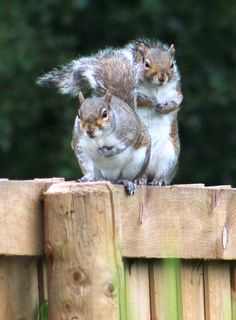 Angry squirrels by Turnip Towers on 500px