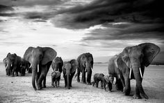 Self-taught British photographer David Yarrow on his new series of photographs that have taken him from the snowy mountain-tops of Japan to the annual migration in Kenya, now on display at London's Eleven Gallery