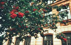 Trees in St Petersburg