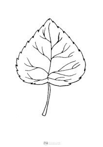 Liść lipy - szablon