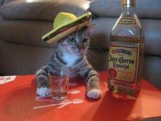 taco cat spelled backwards is still taco cat.  lol