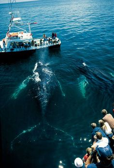 Whale Watching in Maine. Look at the size of that whale!