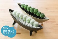 Rose Bush Care - So That You Can Have The Top Rose Bushes Home Decoration Potted Plants Cactusplant Decoration Living Room Study Shelfcourtyard Decoration Cactus Indoor Garden Decorationdiy Cactus Esthetic Terrarium Cactus, Cactus Pot, Cactus Flower, Flower Pots, Mini Cactus Garden, Flower Bookey, Flower Film, Succulent Gardening, Cacti And Succulents