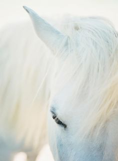 wow - what a beauty / white horse