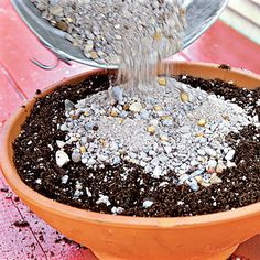 Planting Succulent Containers: Step One - How To Plant Succulents in Containers - Southern Living