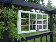 Old window becomes trellis for my Wisteria!