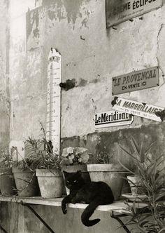 Les petits papiers de Nadezda: Quelques chats de Paris ........El cau de Cati