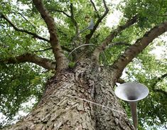 The Hear Heres by Studio Weave -- the sound of trees, amplified for all to hear!