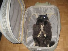 Packing for vacation: You're doing it wrong.. so is this how amelia will be traveling to interlochen????