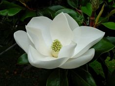This is going to be my wedding flower. White and gorgeous.