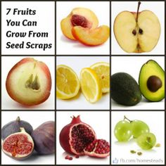 Weekend inspiration: Fruits to grow from seed scraps  #GardeningBasics