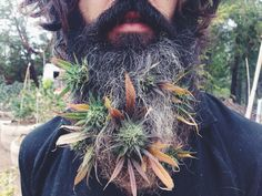 Weed beard? Save money, grow your own marijuana and make small edible delicious marijuana candies. MARIJUANA - Guide to Buying, Growing, Harvesting, and Making Medical Marijuana Oil and Delicious Candies to Treat Pain and Ailments by Mary Bendis, Second Edition. Just $2.99 for great e-book! www.muzzymemo.com