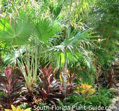 South Florida Landscaping Ideas - Landscape in a Box