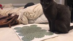 Ever Wondered What Happens When A Cat Is Shown An Optical Illusion?