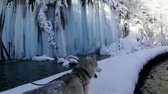 BEAUTIFUL video Tour of the frozen upper falls and run around the Kozjak lake in complete solitude on fresh snow with husky dog. Plitvice Lakes National Park in Croatia