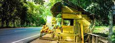 Coconut shop