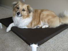 How to build a PVC dog bed- note the difference in the corners...