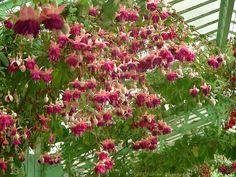 From Natali Antonovich, Royal Greenhouses