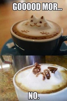 #grumpycat give me this every morning