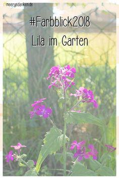 Im Garten blüht so allerhand, das lila oder violett ist. Ein schöner Anblick.